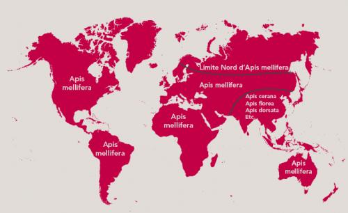 Répartition du genre Apis – Carte par Free Vector Maps